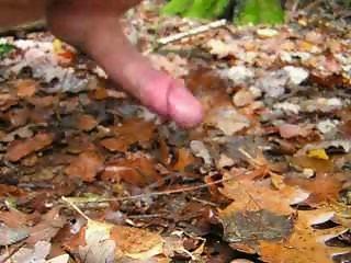 Forest insemination